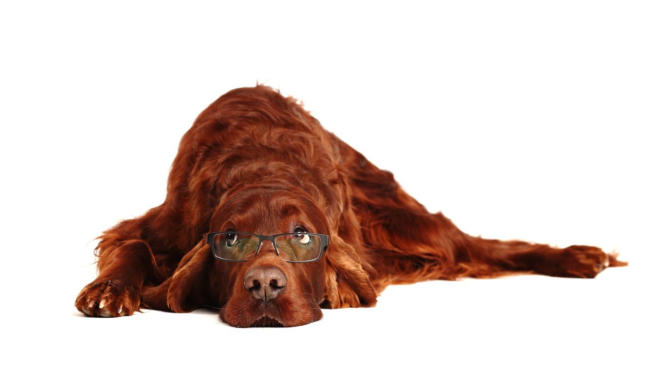 Merits Hundebetreuung